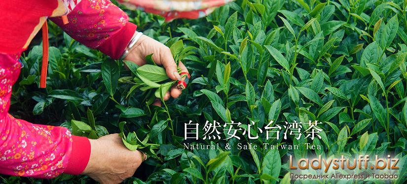 Тайваньские молочные улуны