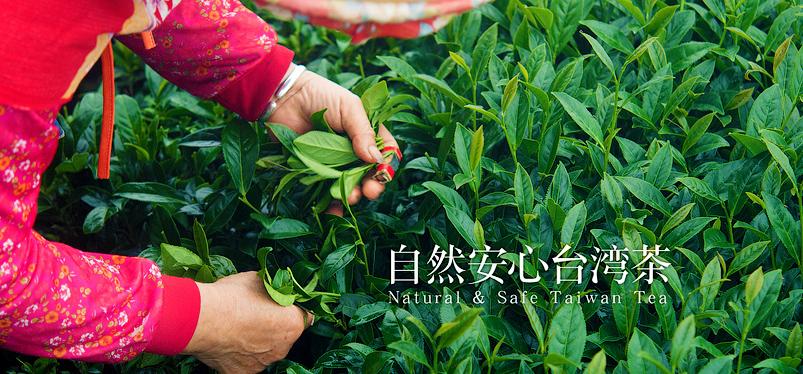 Тайваньские молочные улуны — какой выбрать, где купить, лучшая цена.